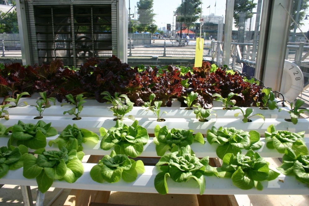 5 Reasons Why Hydroponic Growing Beats Traditional Soil Growing